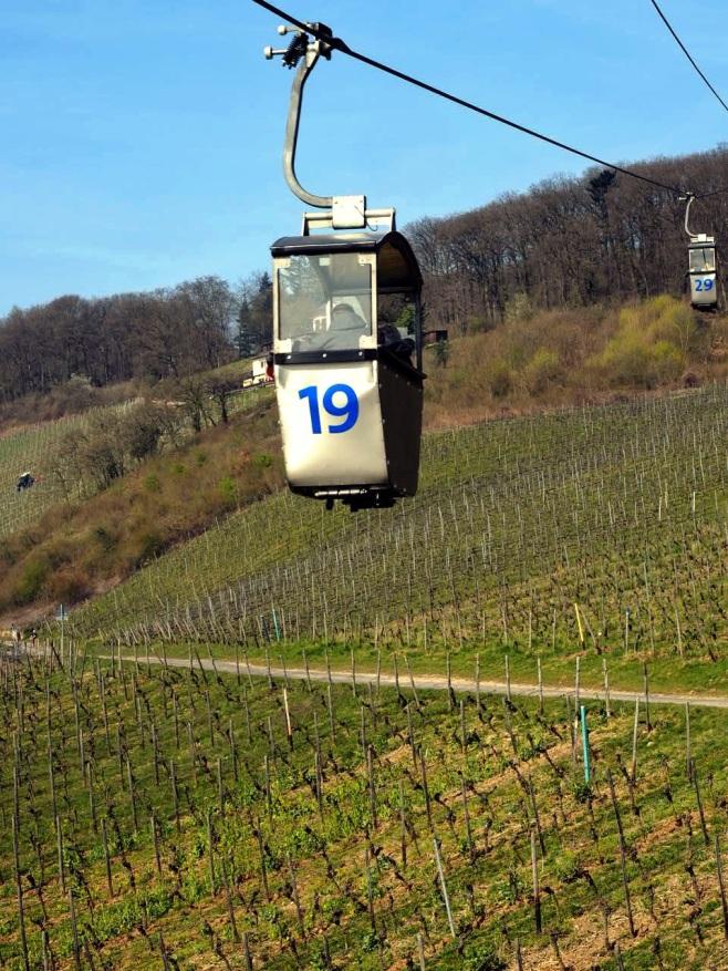 Gondola Over Vineyards
