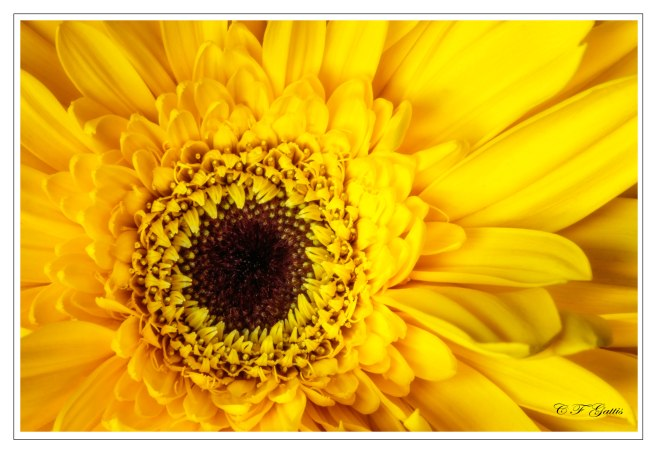 CFG_150826_2548-Edit-2.jpg